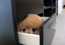 dog-hiding-in-a-drawer